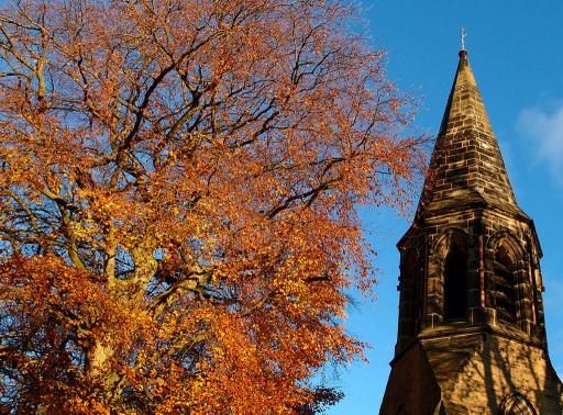 Beech tree, spire, blue sky