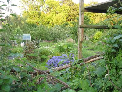 scarcroft-allotments-25june2012-800.jpg
