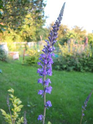 scarcroft-bloom-1-25june2012-600.jpg