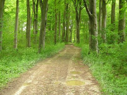 sledmere-trees-230506-680.jpg