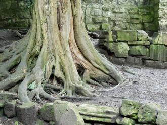 tree-museum-gardens-020707-600.jpg