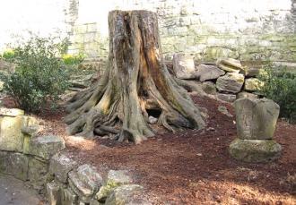 tree-museum-gardens-160413-600.jpg