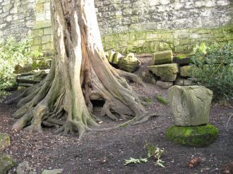 tree-museum-gardens-2-110213-600.jpg