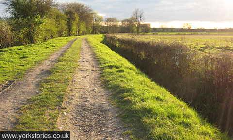 Track on agricultural land, grass, earth, hedges, trees