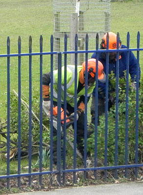 Me cutting down hedge with chainsaws