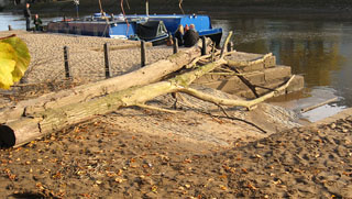 Tree trunks caught by riverside posts