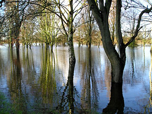 Winter trees reflected in floodwater