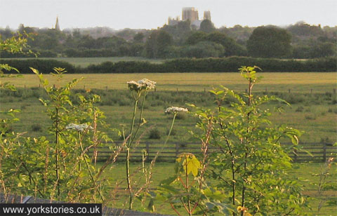 Greenery in foreground, fields and cathedral on horizon