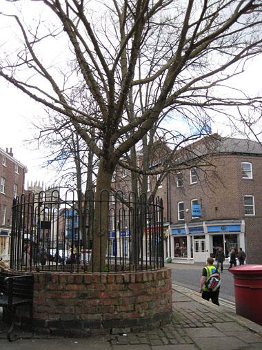 Tree in raised brick planter