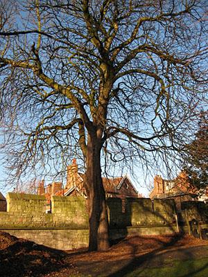 museum-gardens-tree-020112-300.jpg