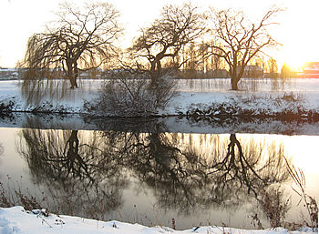 ouse-side-trees_2_050212_350257.jpg