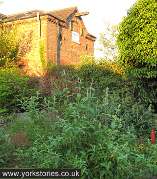 Victorian brick buildings and buddleia