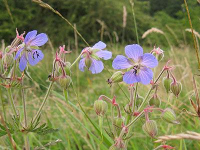 rawcliffe-meadows-020812-400.jpg