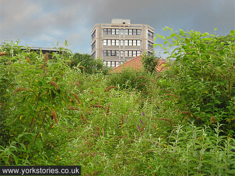 Concrete building above greenery