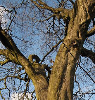 tree-museum-gardens-110213-325.jpg