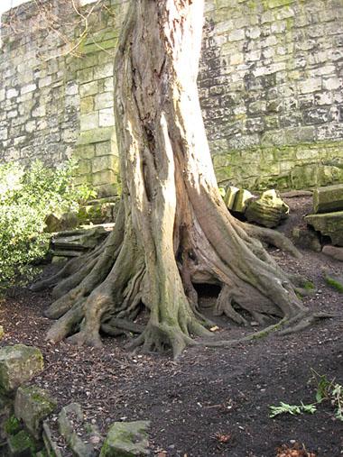 tree-museum-gardens-trunk-110213-380.jpg