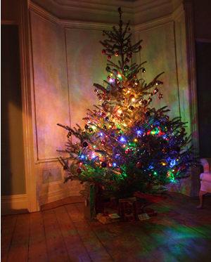 tree_241211_300.jpg