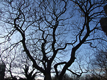tree_silhouette_020112_350.jpg