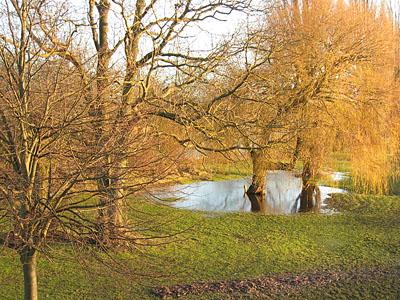 trees-ings-clifton-bridge-031212-400.jpg