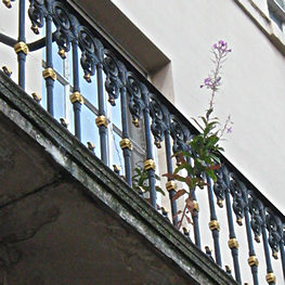 Detail of balcony, with weed, St Leonard's Place