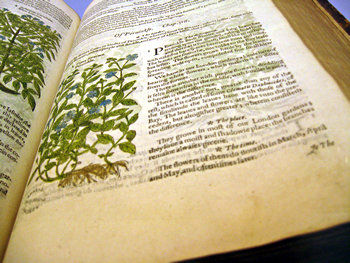 Venerable botanical volume, Yorkshire Museum
