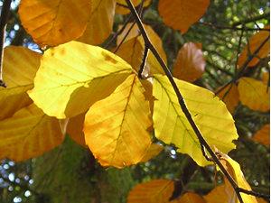 Autumn leaves, Homestead Park
