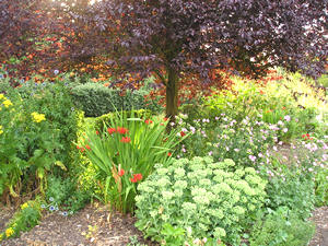 Herbaceous borders, Homestead Park