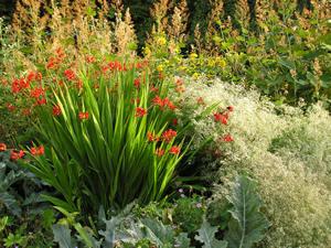 Herbaceous borders, Homestead Park
