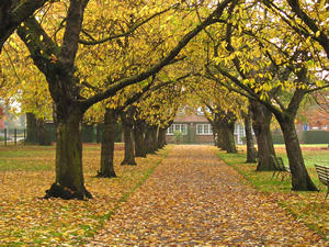 Tree lined walkway, autumn