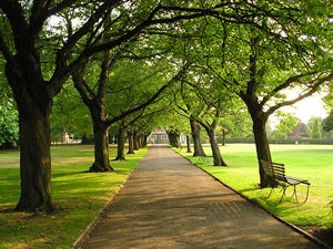 Tree lined walkway, summer