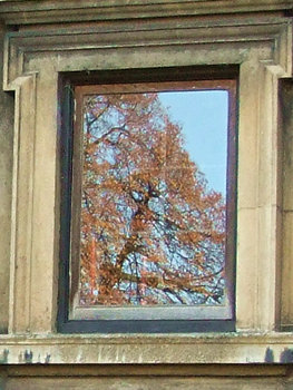 Reflection of trees in window – November