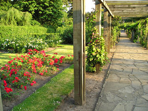 Red roses and pergola, West Bank Park