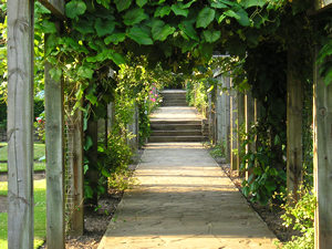 Greenery-covered pergola