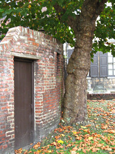 Tree and wall, Gray's Court, York