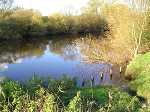 River Ouse near the Ings