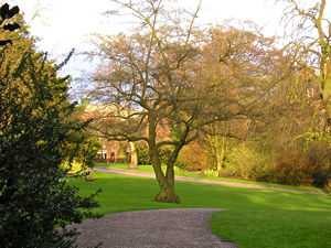 Museum Gardens – tree and lawns
