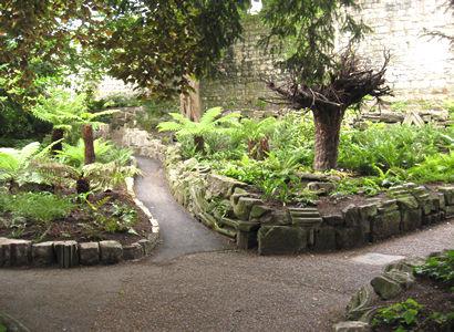 Fernery, Museum Gardens