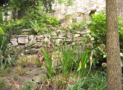 Planting and old abbey stone