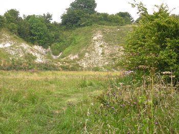 Wharram quarry nature reserve