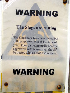 Warning sign – the stags are rutting