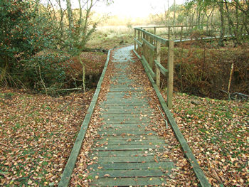 Skipwith Common – wooden walkway